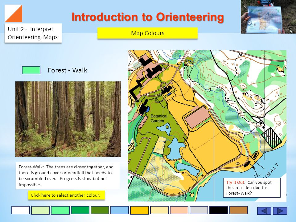 Introduction to Orienteering Unit 2 - Interpret Orienteering Maps Forest-Walk: The trees are closer together, and there is ground cover or deadfall that needs to be scrambled over.