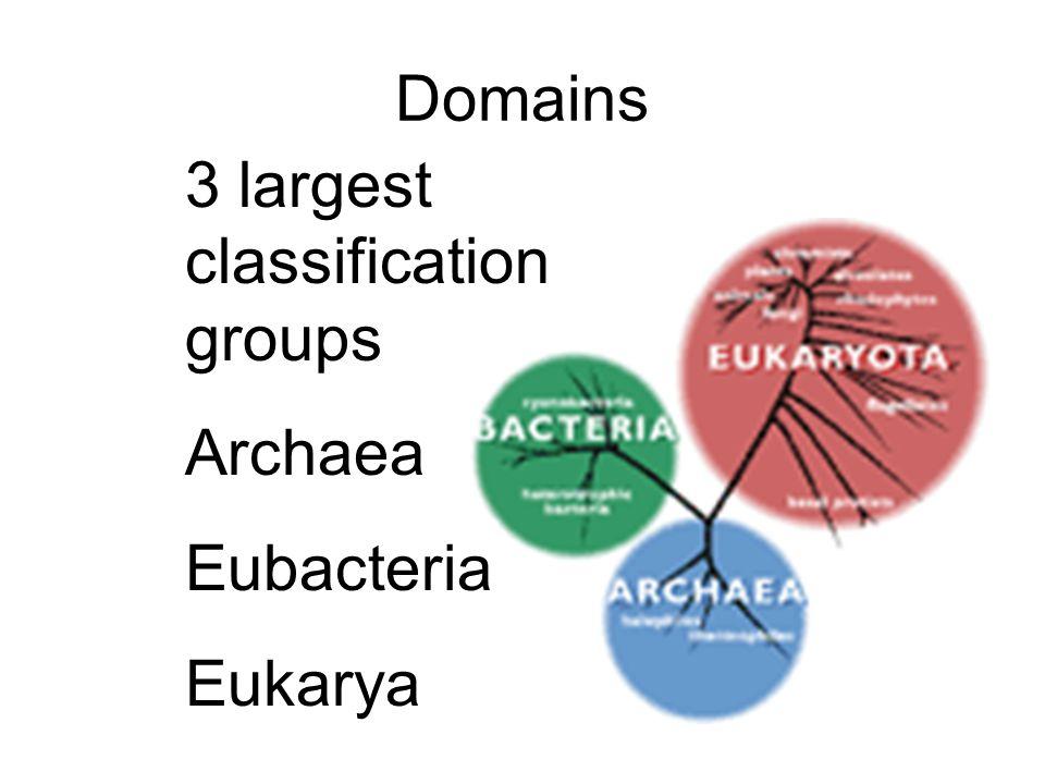 Domains 3 largest classification groups Archaea Eubacteria Eukarya