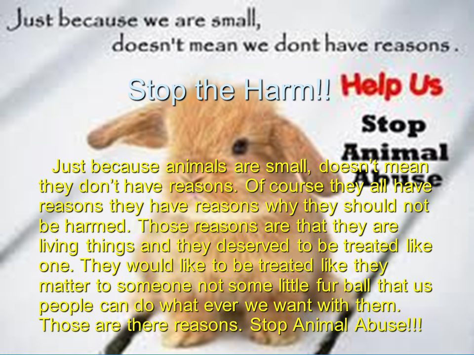 Stop the Harm!. Just because animals are small, doesn't mean they don't have reasons.