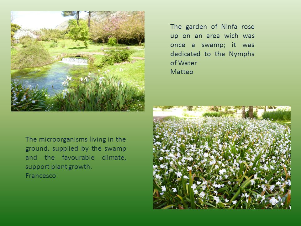 The microorganisms living in the ground, supplied by the swamp and the favourable climate, support plant growth.
