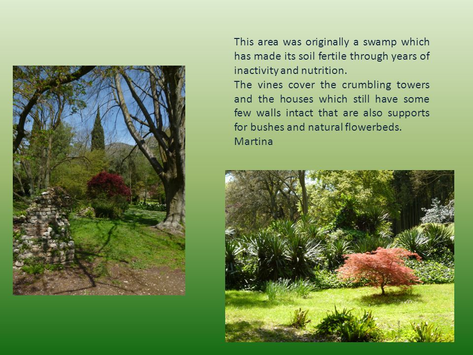 This area was originally a swamp which has made its soil fertile through years of inactivity and nutrition.