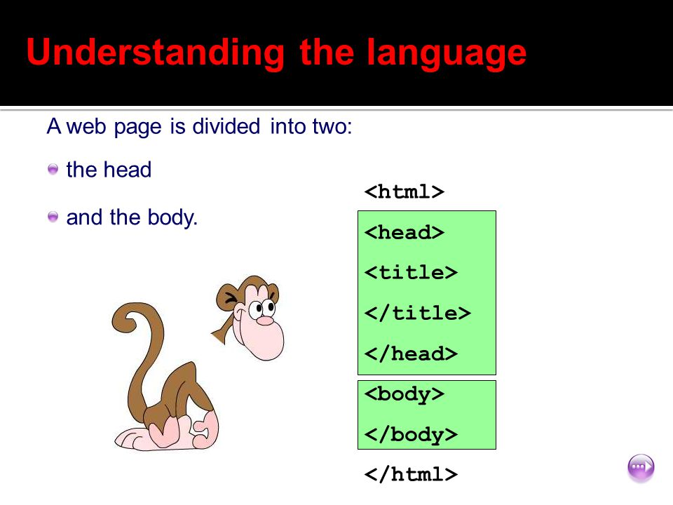 7 of 12 Understanding the language the head A web page is divided into two: and the body.