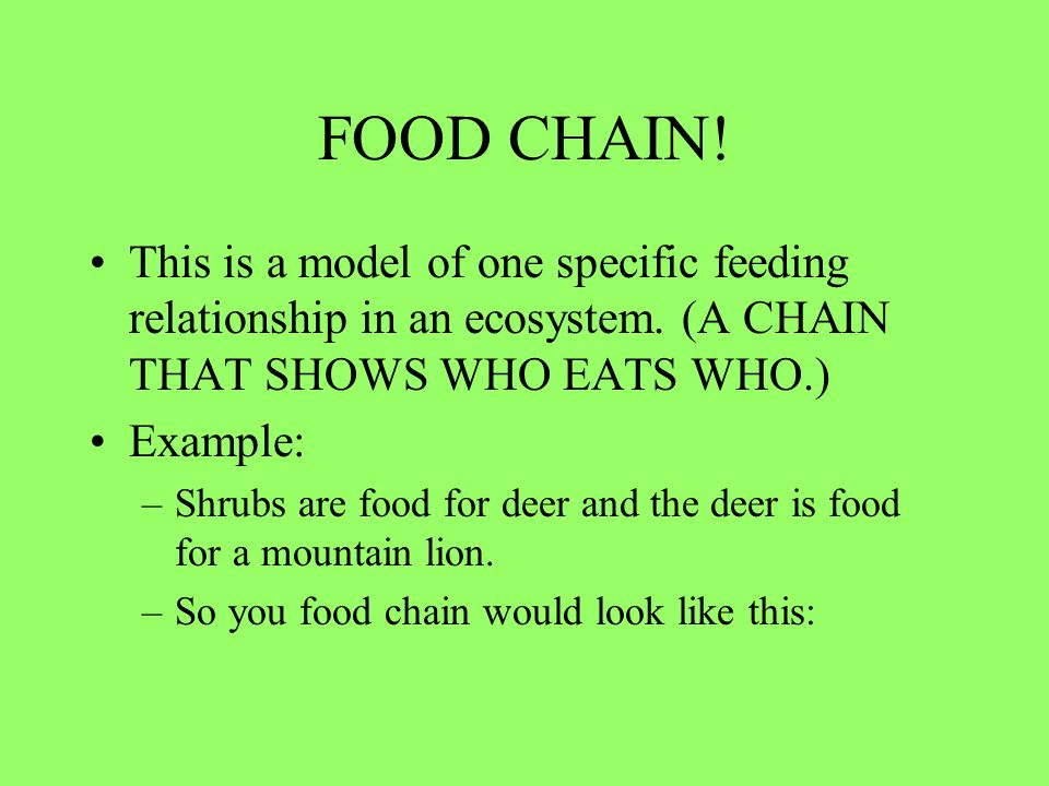 FOOD CHAIN! This is a model of one specific feeding relationship in an ecosystem. (A CHAIN THAT SHOWS WHO EATS WHO.) Example: –Shrubs are food for dee