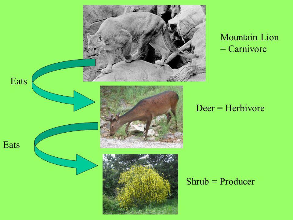 Mountain Lion = Carnivore Deer = Herbivore Shrub = Producer Eats