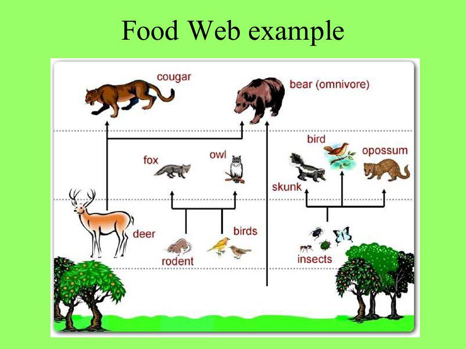 Food Web example