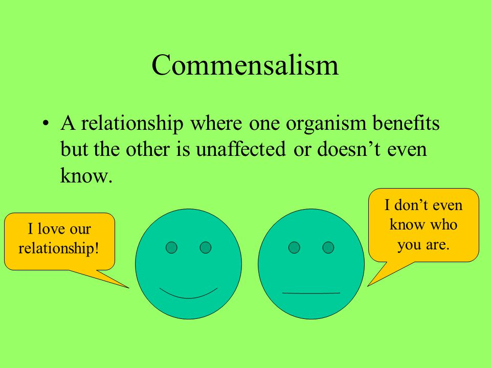 Commensalism A relationship where one organism benefits but the other is unaffected or doesn't even know. I love our relationship! I don't even know w