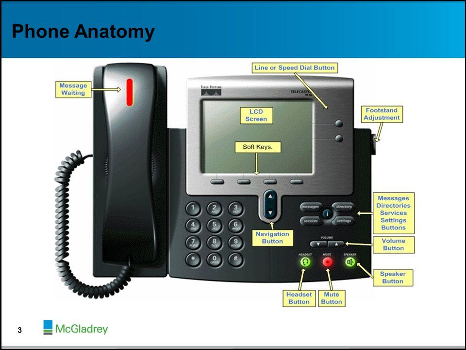 Phone Anatomy 3