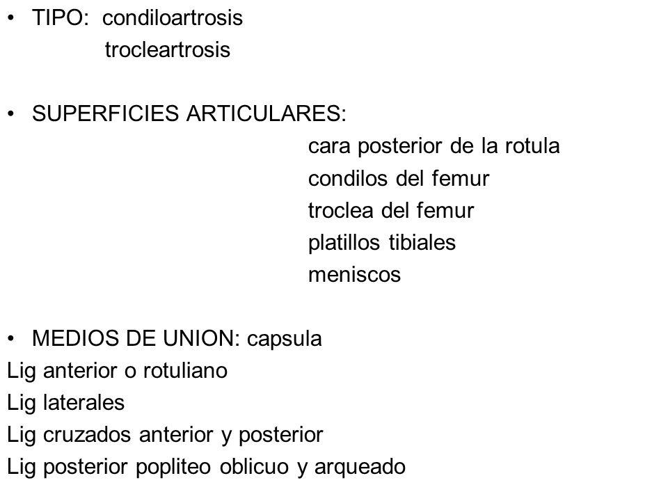 TIPO: condiloartrosis trocleartrosis SUPERFICIES ARTICULARES: cara posterior de la rotula condilos del femur troclea del femur platillos tibiales meni
