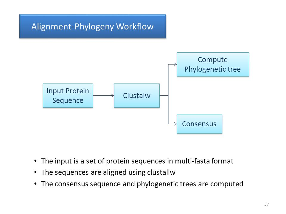 Input Protein Sequence Clustalw Compute Phylogenetic tree Consensus Alignment-Phylogeny Workflow The input is a set of protein sequences in multi-fast