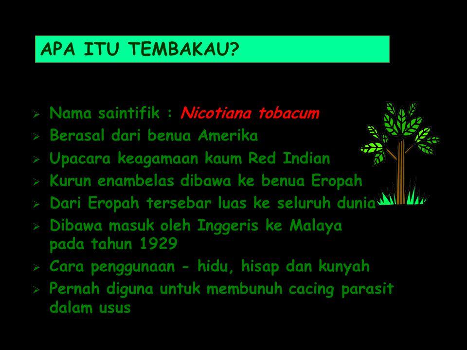 APA ITU TEMBAKAU?  Nama saintifik : Nicotiana tobacum  Berasal dari benua Amerika  Upacara keagamaan kaum Red Indian  Kurun enambelas dibawa ke be
