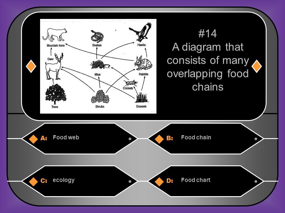 B. Food chain