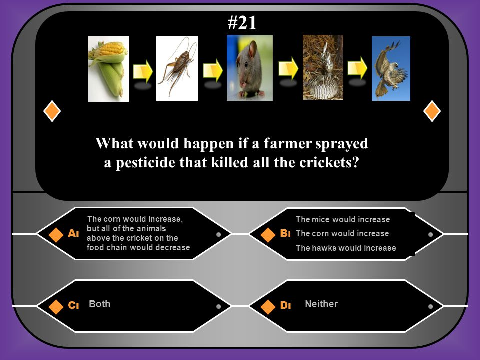 A. The mice would increase The corn would decrease The hawks would decrease