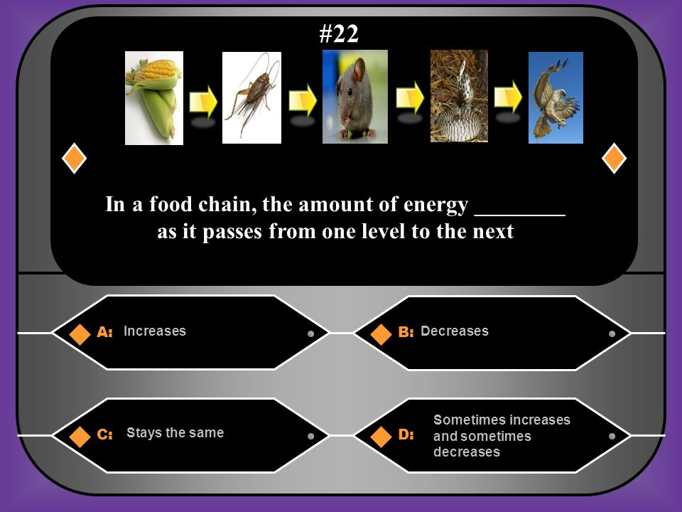 A. The corn would increase, but all of the animals above the cricket on the food chain would decrease