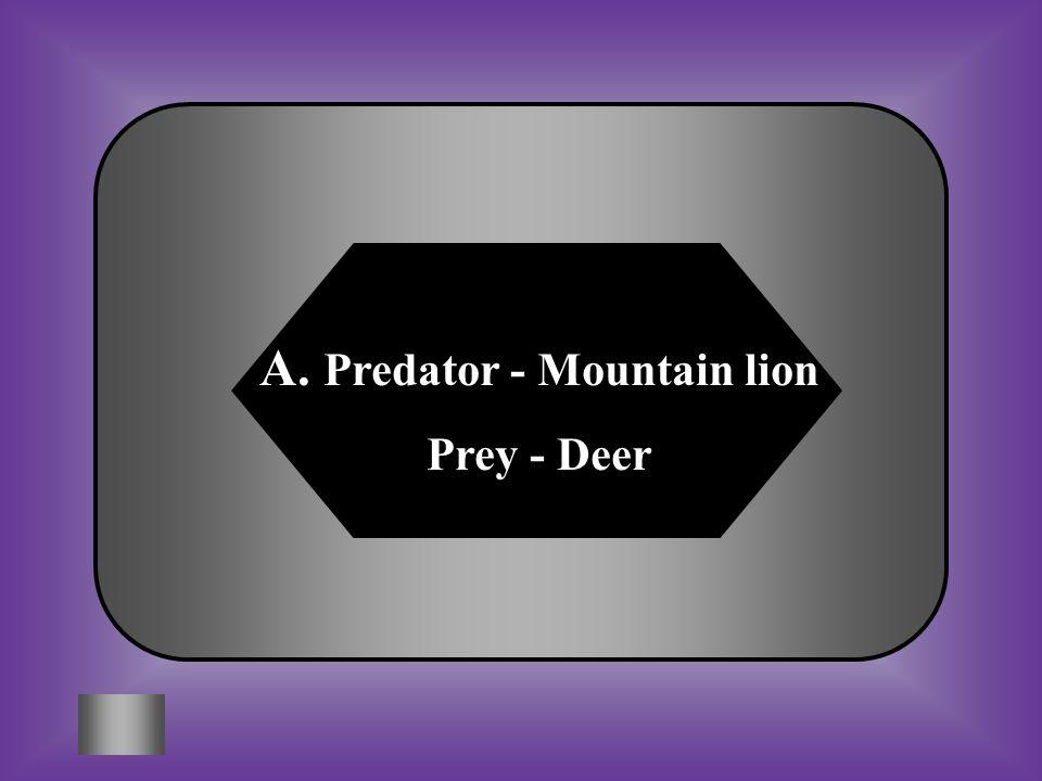 A:B: Predator - Mountain lion Prey - Deer Predator – Deer Prey - Tree C:D: Predator – Snake Prey - Cricket All of these #3 Identify one predator-prey relationship in this food web.