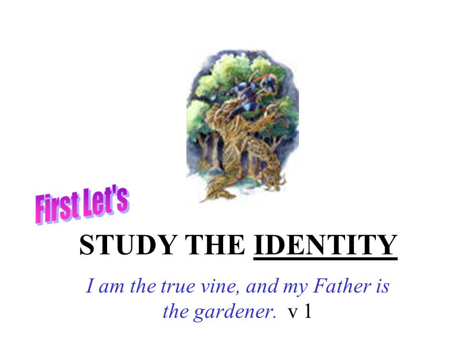 STUDY THE IDENTITY I am the true vine, and my Father is the gardener. v 1