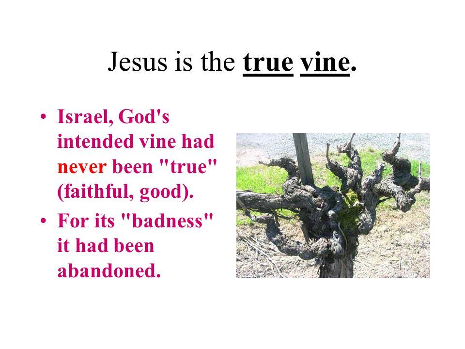 Jesus is the true vine. Israel, God s intended vine had never been true (faithful, good).