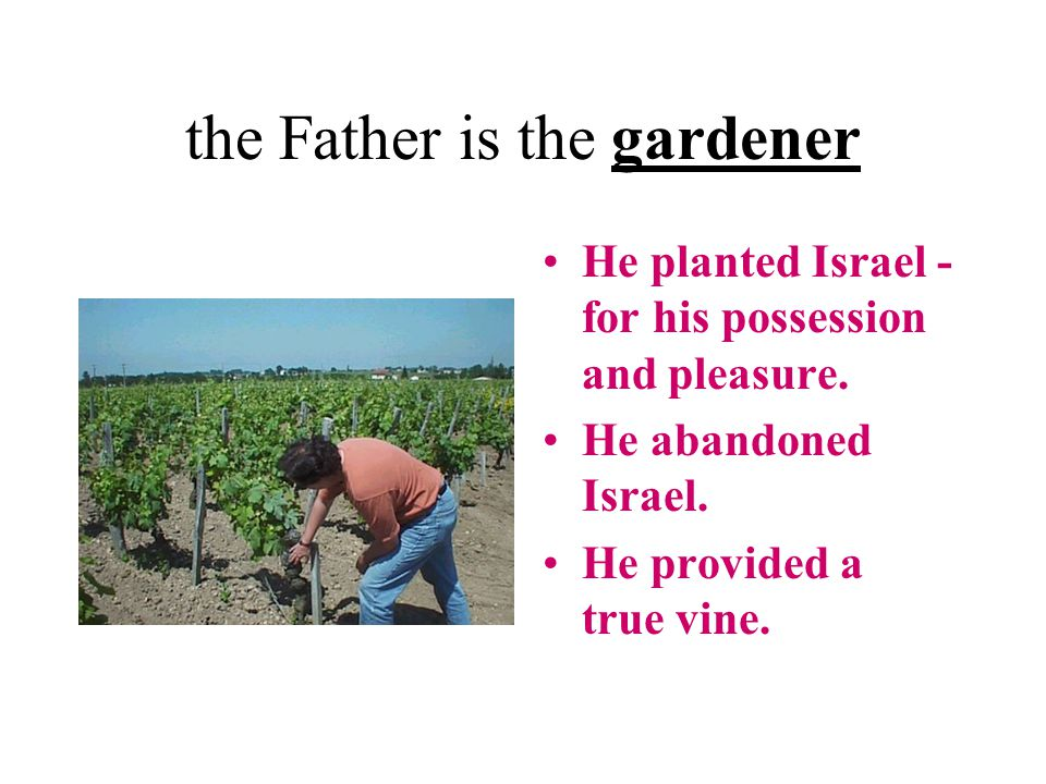 the Father is the gardener He planted Israel - for his possession and pleasure.