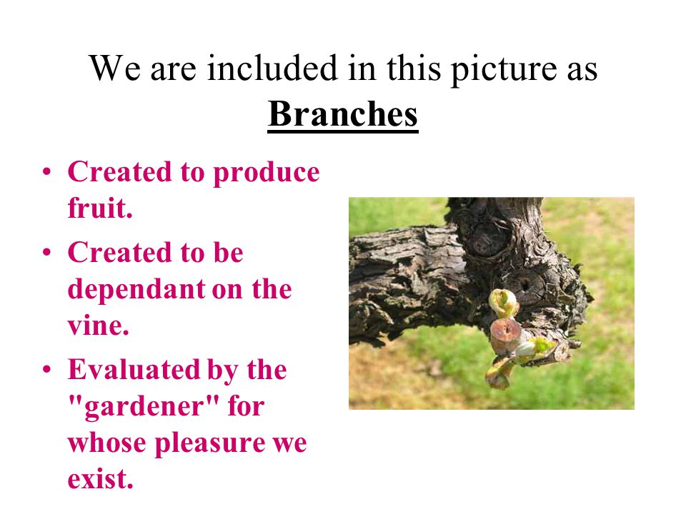 We are included in this picture as Branches Created to produce fruit.
