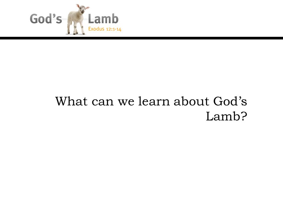 What can we learn about God's Lamb?