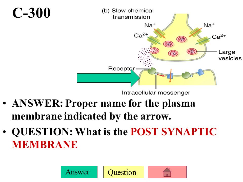 Question Answer C-200 ANSWER: This enzyme is responsible for the breakdown of Norepinephrine neurotransmitter. QUESTION: What is MONOAMINE OXIDASE