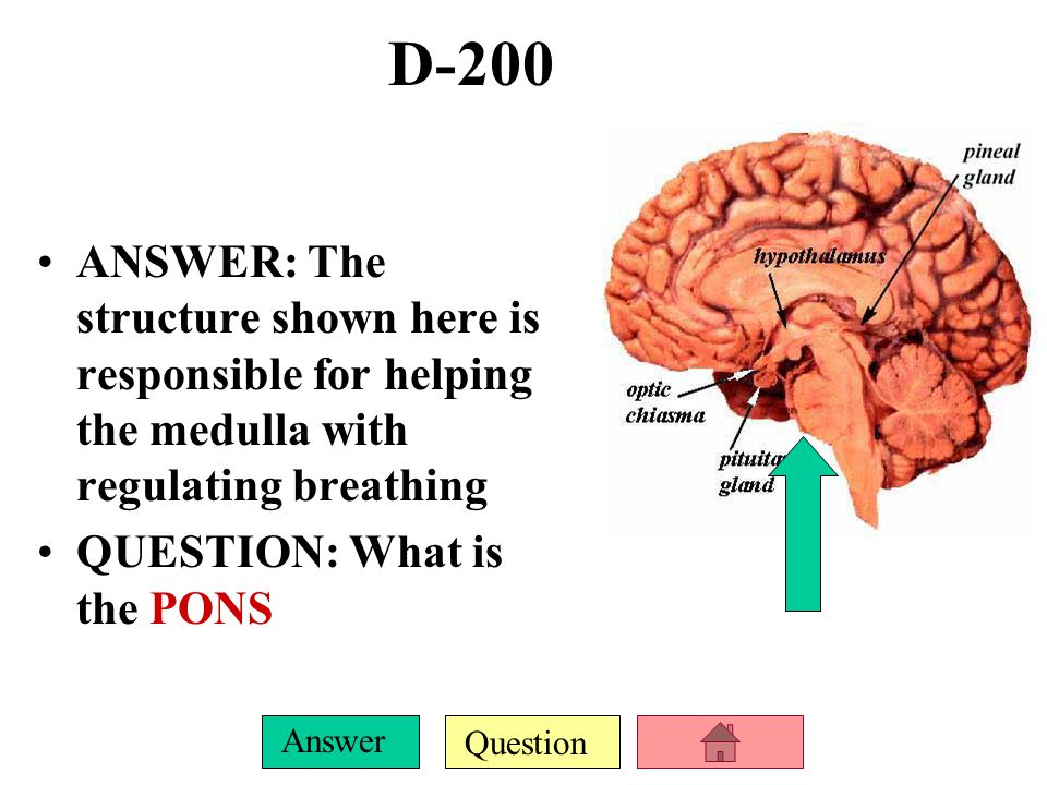 Question Answer D-100 ANSWER: This structure near the 3 rd ventricle is responsible for prioritizing incoming sensory info and shipping it off to the