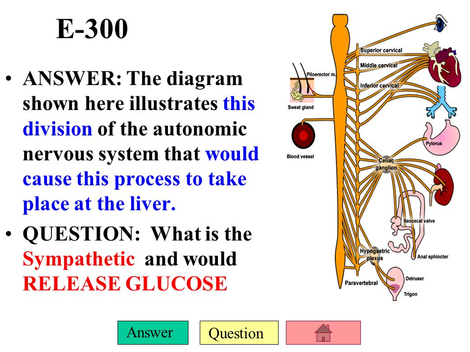 Question Answer E-200 ANSWER: The proper name for the 10 th (X) cranial nerve, as it is the one responsible for innervating and controlling many inter