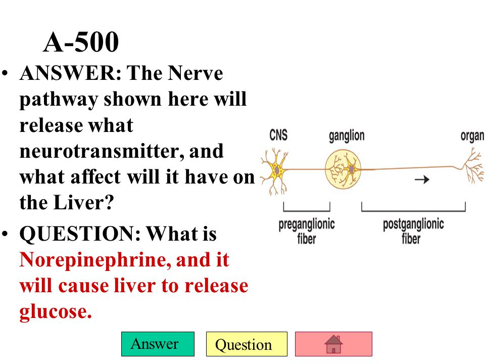 Question Answer E-500 ANSWER: A long preganglionic fiber followed by a short post ganglionic fiber is would have this effect on the gallbladder.