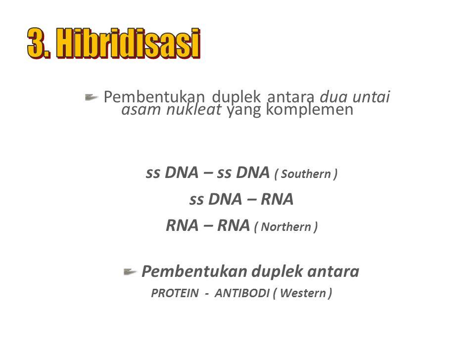 ss DNA – ss DNA ( Southern ) ss DNA – RNA RNA – RNA ( Northern ) Pembentukan duplek antara PROTEIN - ANTIBODI ( Western ) Pembentukan duplek antara dua untai asam nukleat yang komplemen
