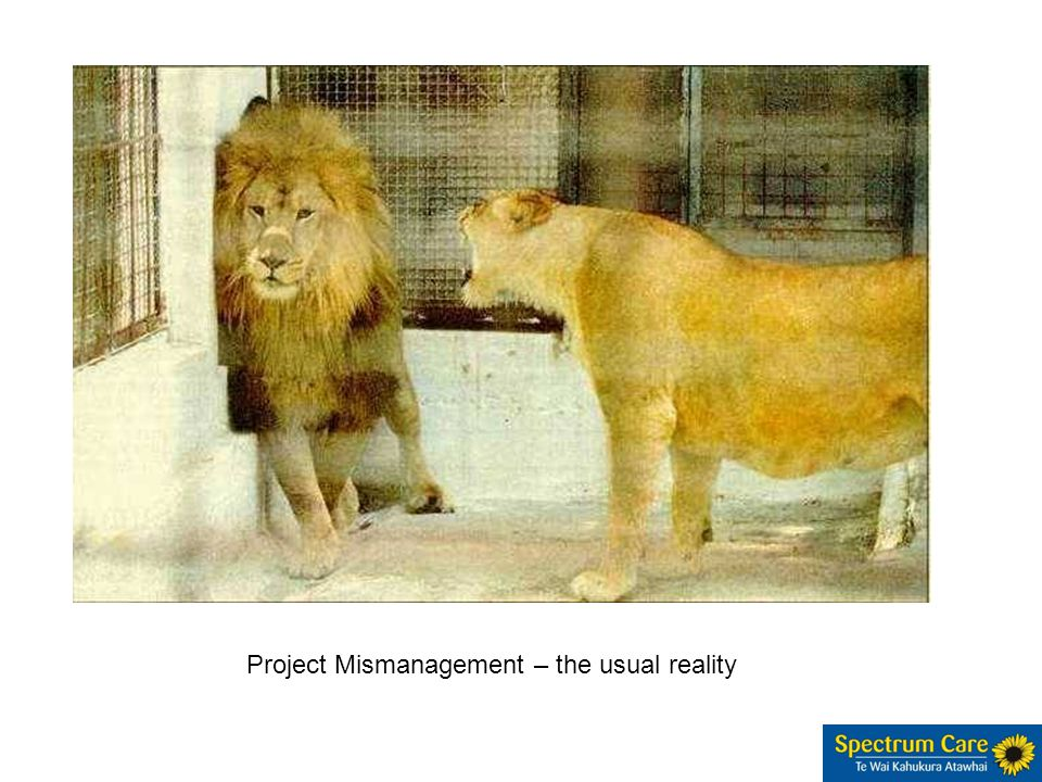 Project Mismanagement – the usual reality