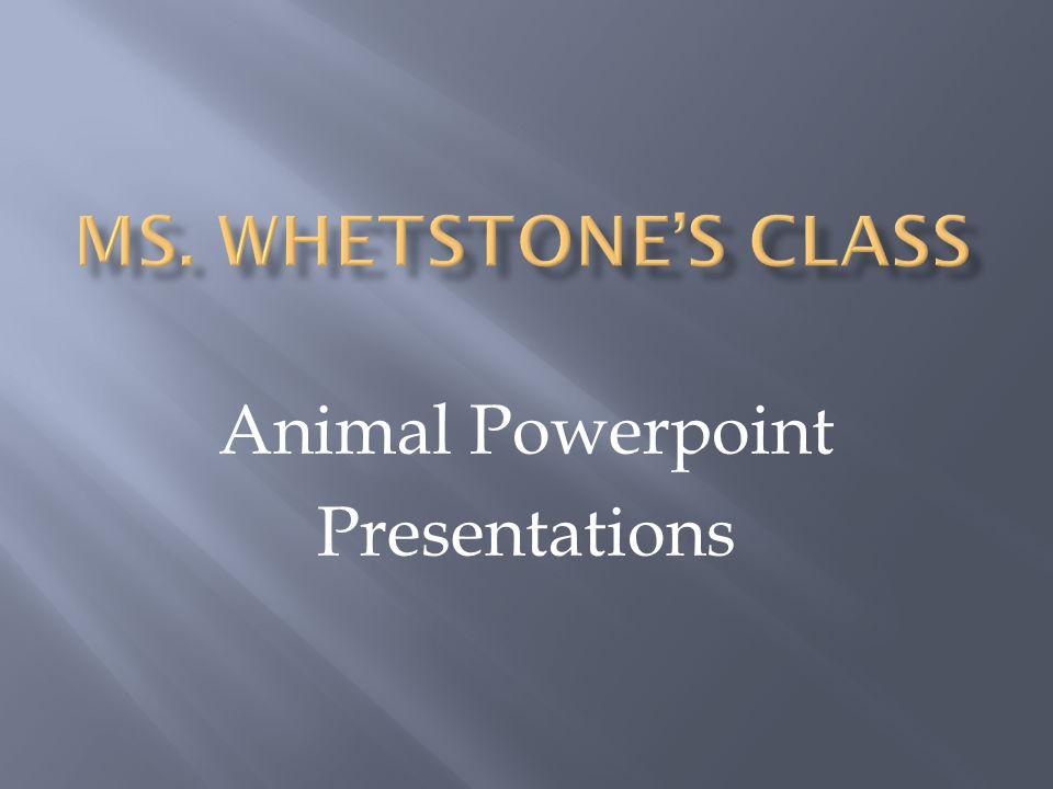 Animal Powerpoint Presentations