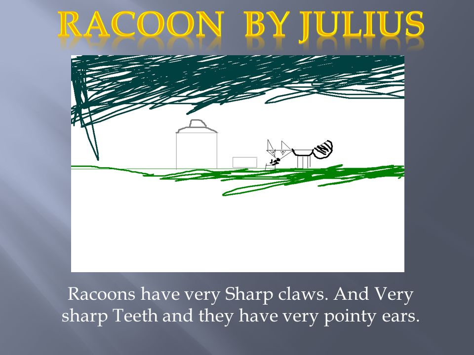Racoons have very Sharp claws. And Very sharp Teeth and they have very pointy ears.