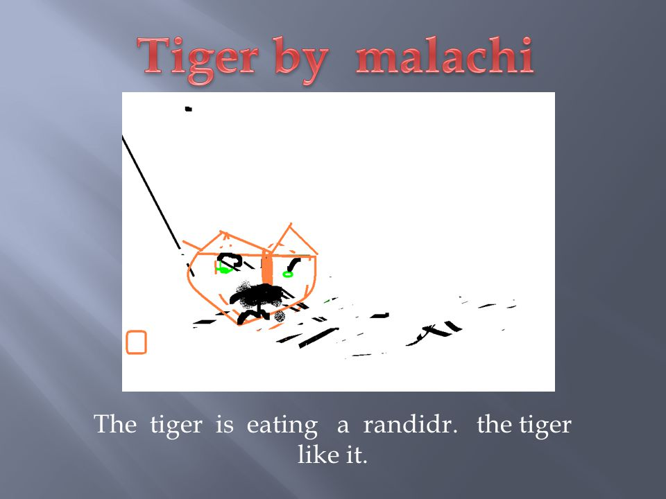 The tiger is eating a randidr. the tiger like it.