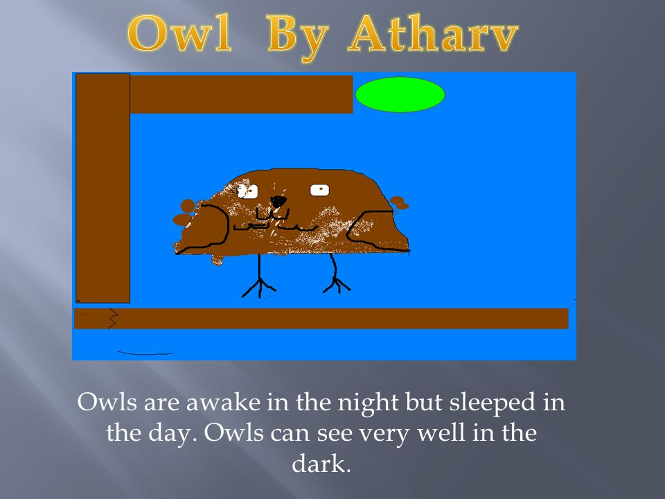 Owls are awake in the night but sleeped in the day. Owls can see very well in the dark.