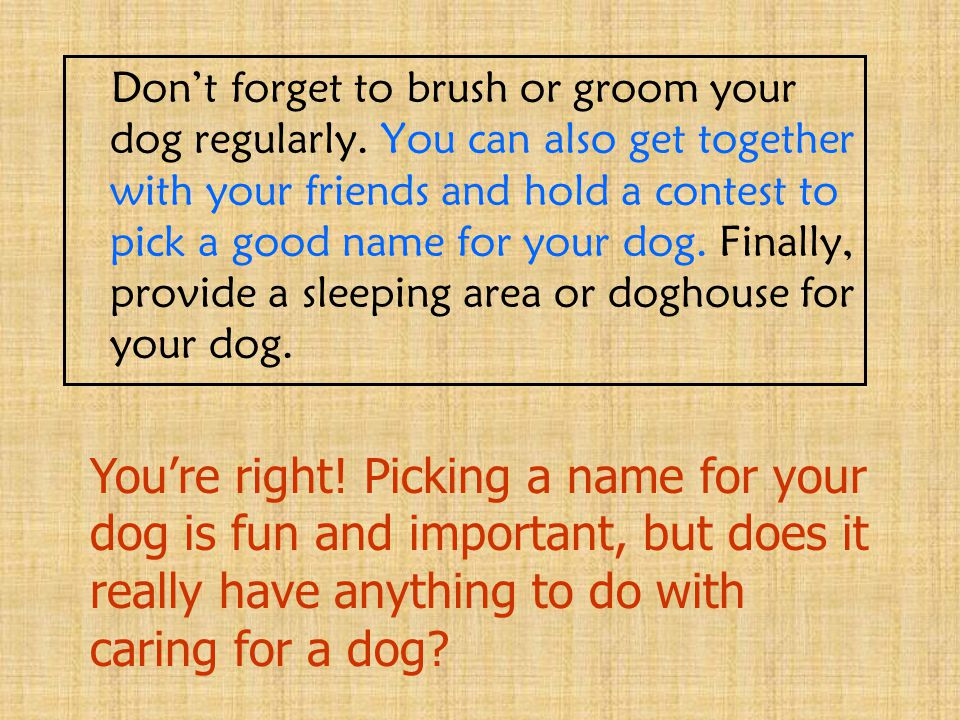 Don't forget to brush or groom your dog regularly. You can also get together with your friends and hold a contest to pick a good name for your dog. Fi