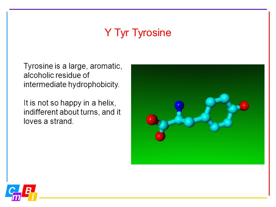 Y Tyr Tyrosine Tyrosine is a large, aromatic, alcoholic residue of intermediate hydrophobicity. It is not so happy in a helix, indifferent about turns