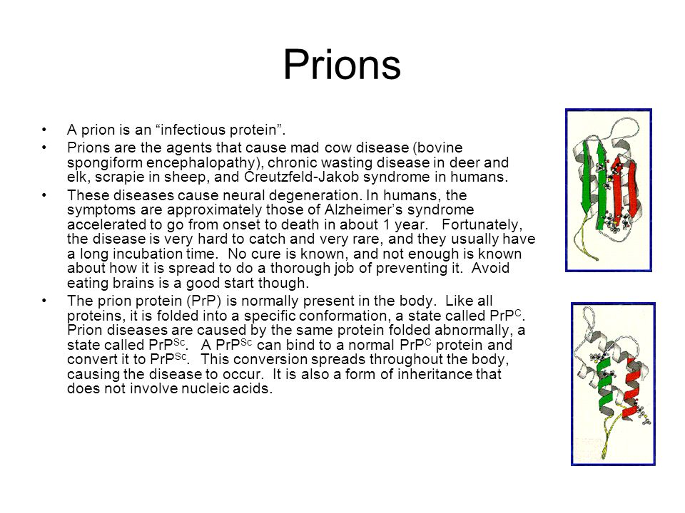 "Prions A prion is an ""infectious protein"". Prions are the agents that cause mad cow disease (bovine spongiform encephalopathy), chronic wasting diseas"