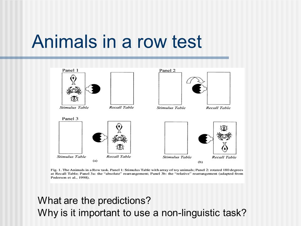 Animals in a row test What are the predictions Why is it important to use a non-linguistic task
