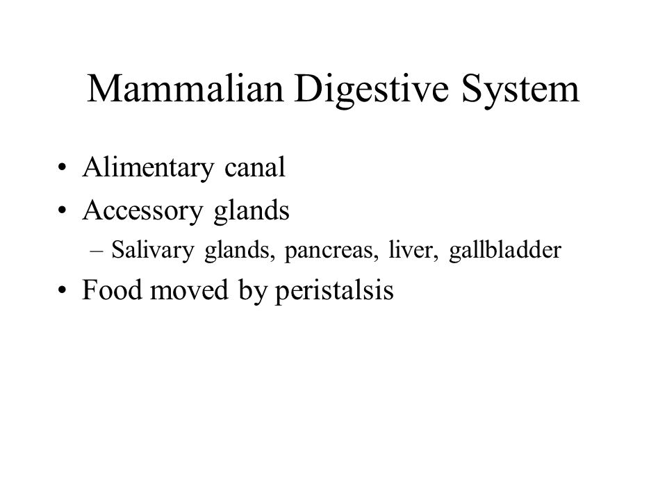 Mammalian Digestive System Alimentary canal Accessory glands –Salivary glands, pancreas, liver, gallbladder Food moved by peristalsis