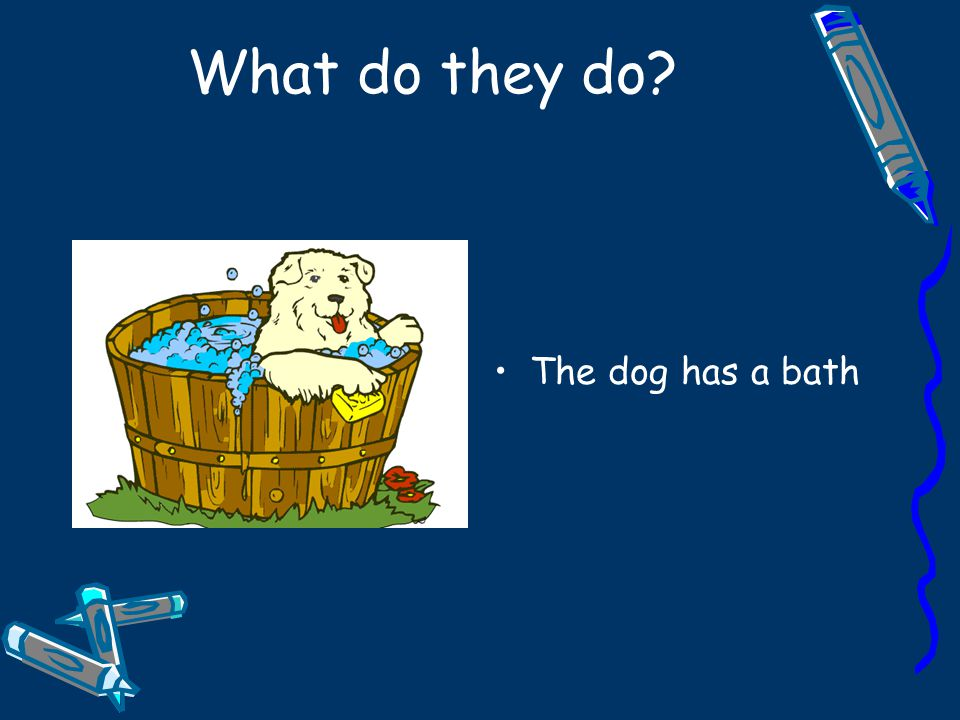 What do they do The dog has a bath