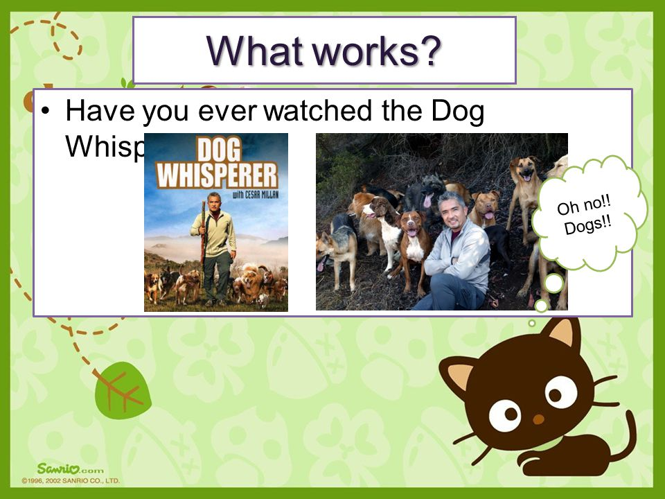 Have you ever watched the Dog Whisperer? What works? Oh no!! Dogs!!