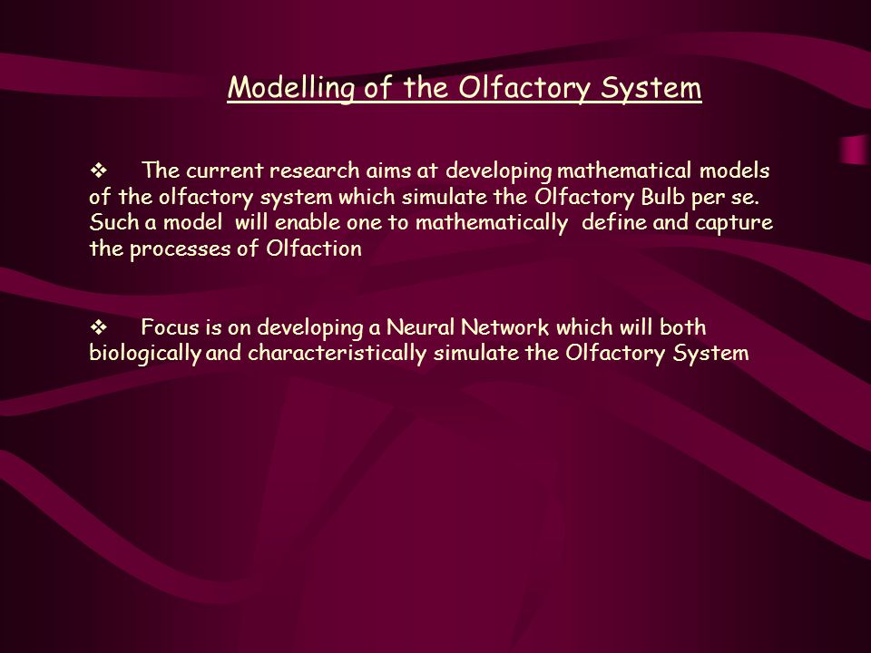 Modelling of the Olfactory System  The current research aims at developing mathematical models of the olfactory system which simulate the Olfactory Bulb per se.