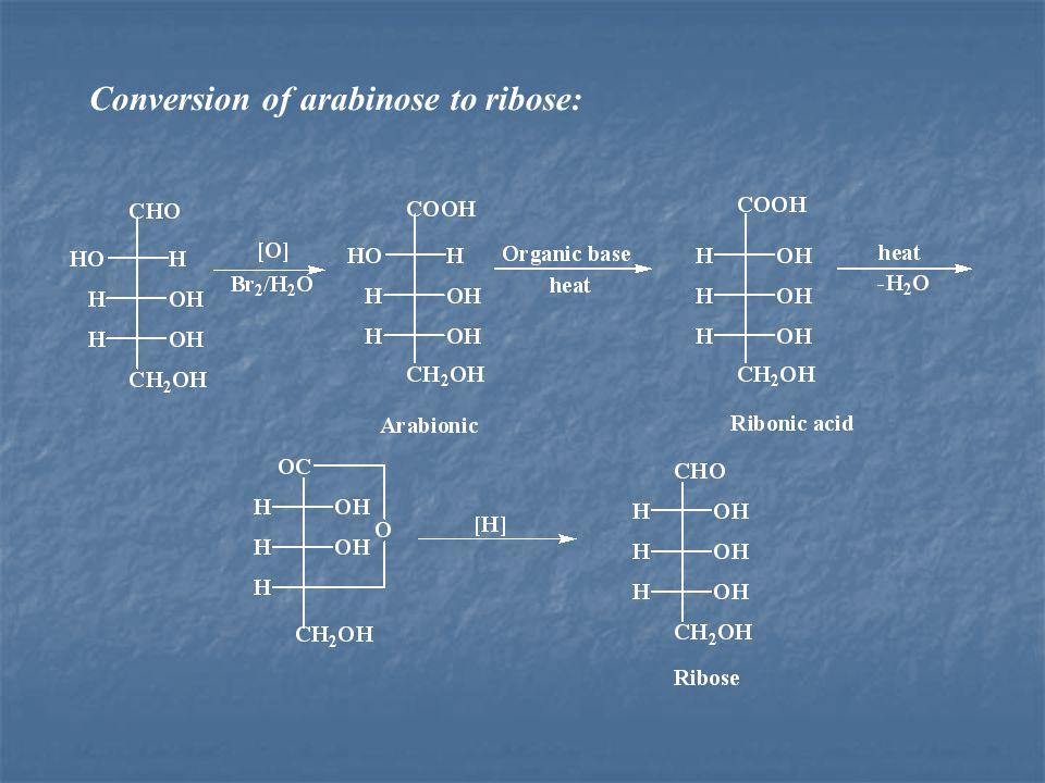 Conversion of arabinose to ribose: