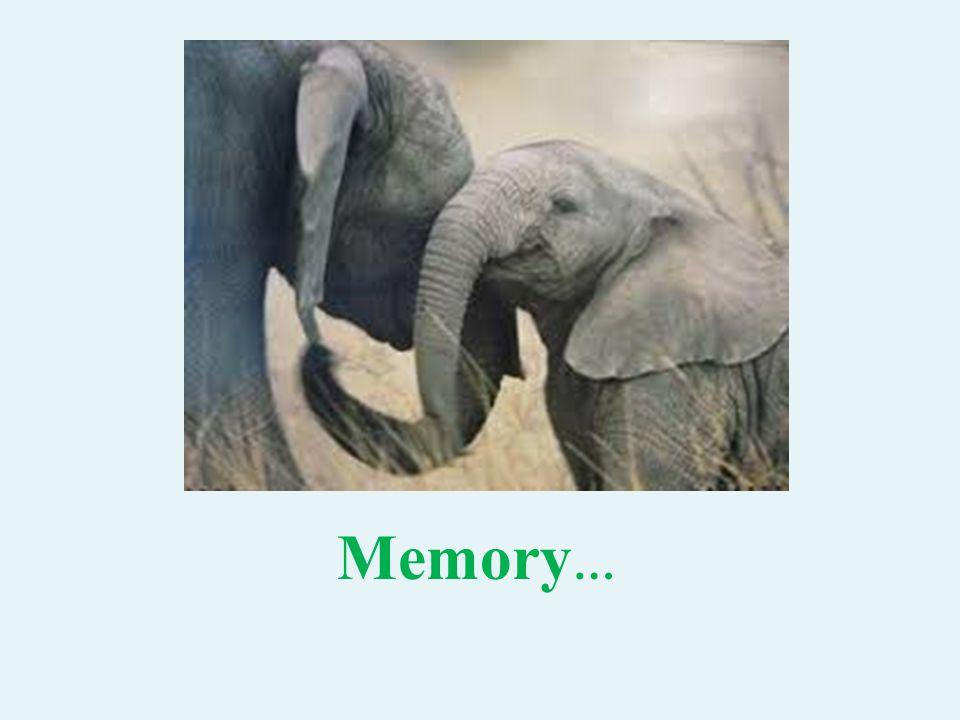 Memory …