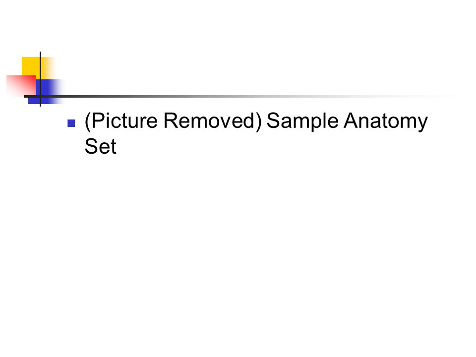 (Picture Removed) Sample Anatomy Set