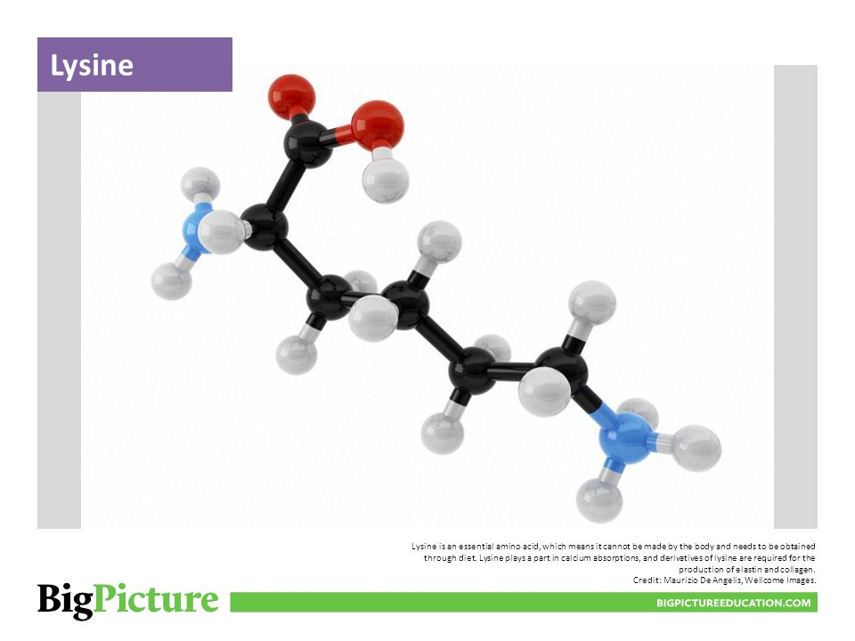 Lysine is an essential amino acid, which means it cannot be made by the body and needs to be obtained through diet.