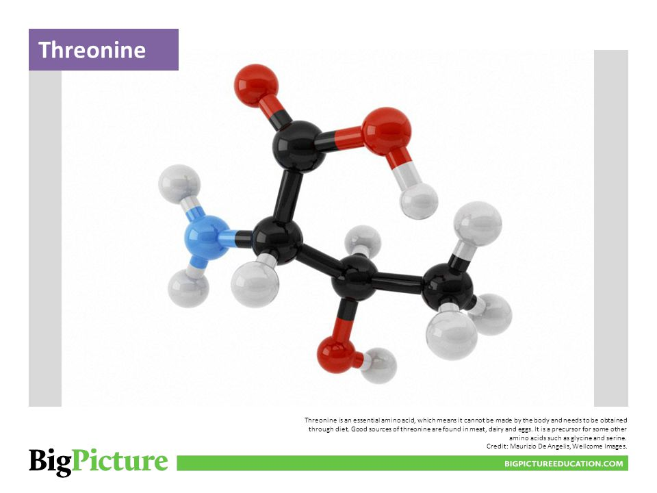 Threonine is an essential amino acid, which means it cannot be made by the body and needs to be obtained through diet.
