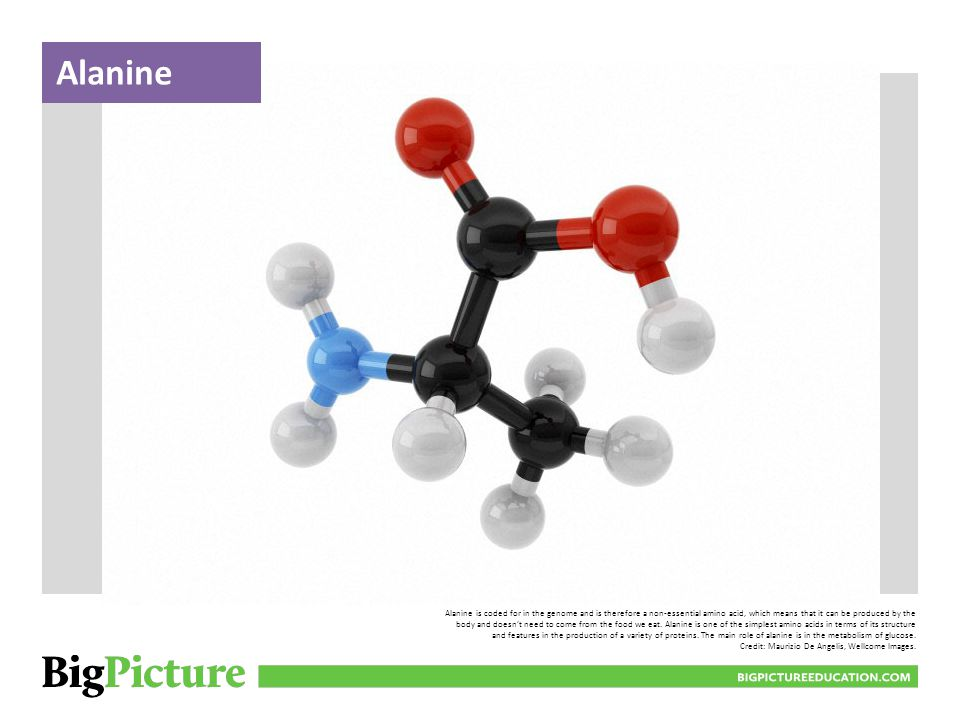 Alanine is coded for in the genome and is therefore a non-essential amino acid, which means that it can be produced by the body and doesn't need to come from the food we eat.