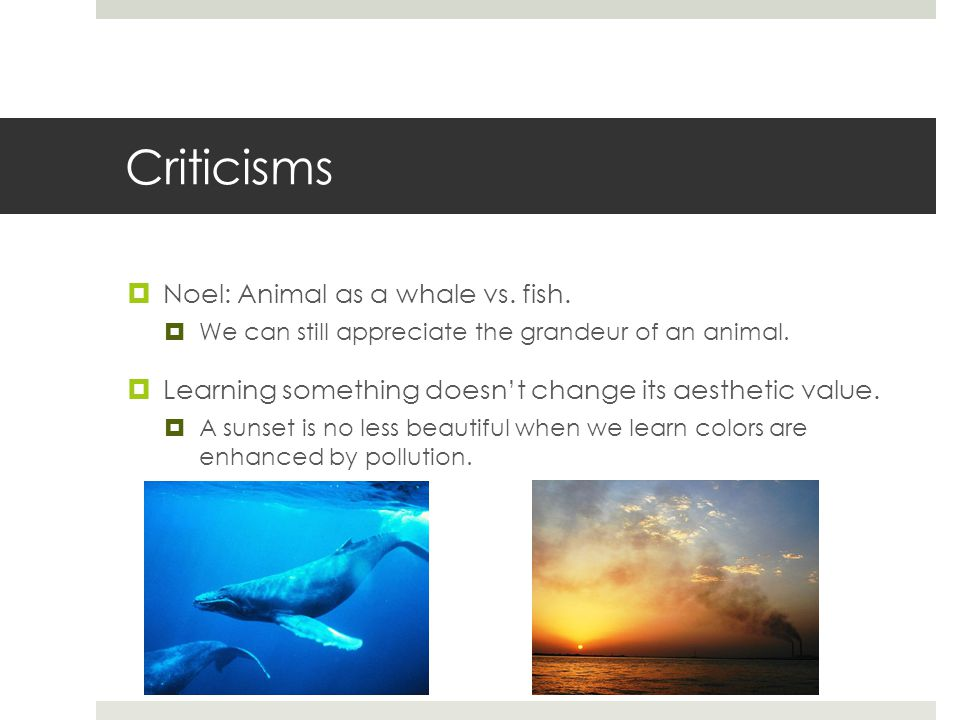 Criticisms  Noel: Animal as a whale vs. fish.