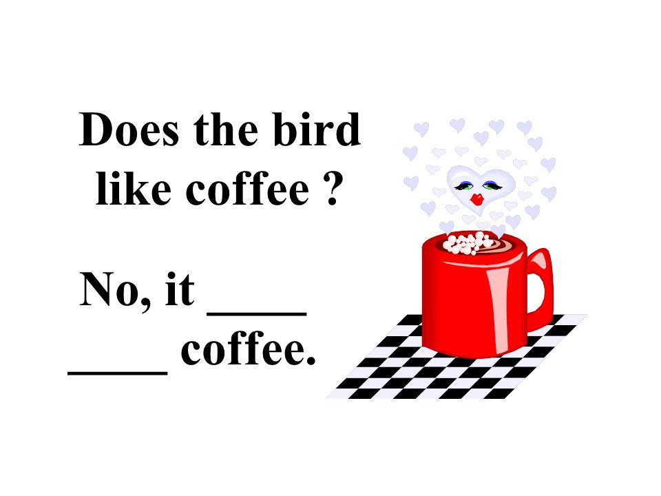 Does the bird like coffee No, it ____ ____ coffee.