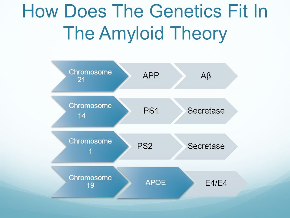 How Does The Genetics Fit In The Amyloid Theory Chromosome 21 APPAβ Chromosome 14 PS1Secretase Chromosome 1 PS2Secretase Chromosome 19 APOE E4/E4